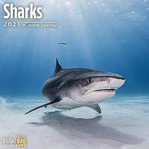 2021 Sharks Wall Calendar by Bright Day, 12 x 12 Inch, Under The Sea Ocean Animal