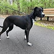 Amazon.com: Herm Sprenger acabado negro Prong perro collar ...