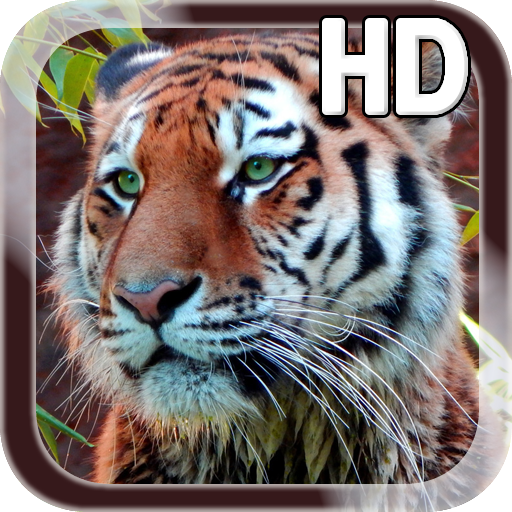 Amazon Tiger Live Wallpaper Appstore For Android