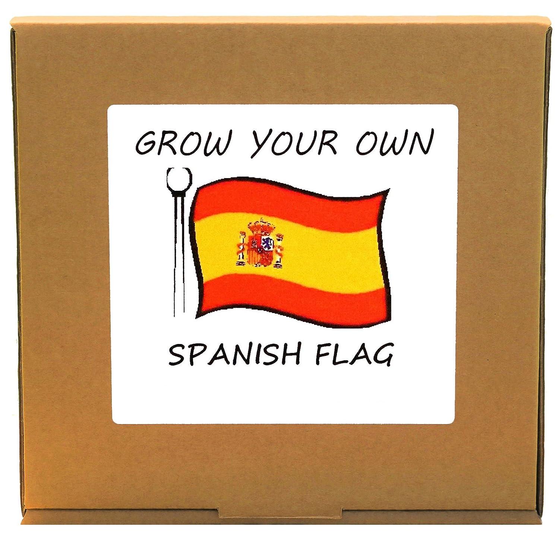 Grow Your Own Spanish Flag Plant Kit - Indoor/Windowsill Gardening GrowYourOwnPlants