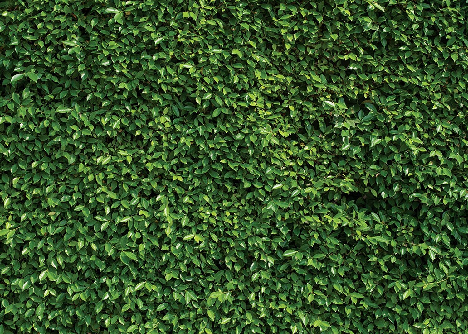 SJOLOON 7X5ft Green Leaves Backdrop Grass Backdrop Natural Green Lawn Party Photography Backdrop Birthday Newborn Baby Lover Wedding Photo Studio Props 10923