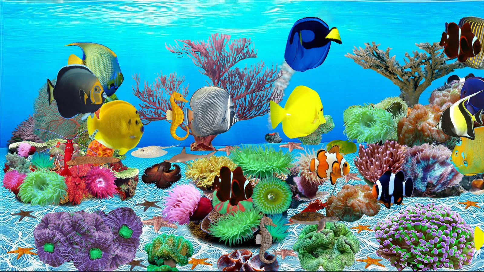 Top 10 best live aquarium fish screensaver best of 2018 for Aquarium fish online
