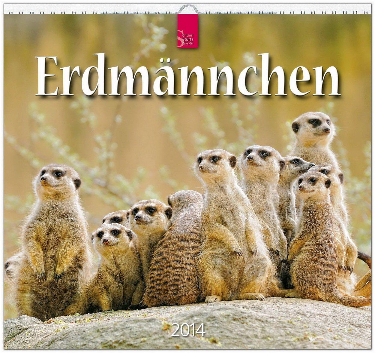 Erdmännchen 2014: Original Stürtz-Kalender - Mittelformat-Kalender 33 x 31 cm [Spiralbindung]