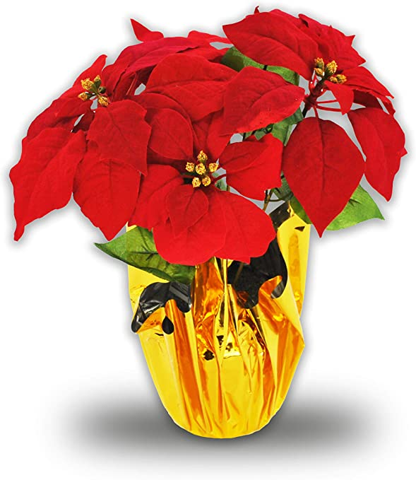 Amazon Com Queens Of Christmas Poinsettia Pot 12 Red Home Kitchen