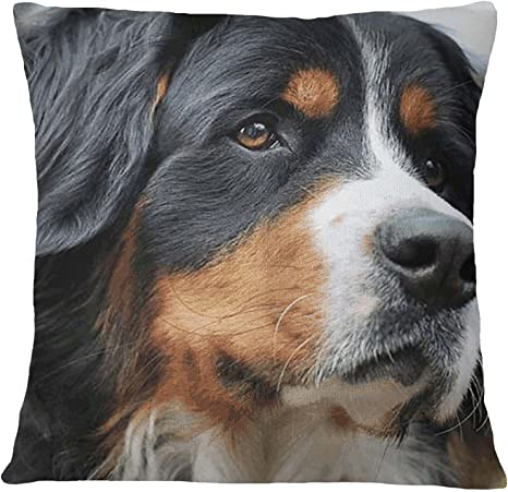 S4sassy Pillow Square Cushion Cover Bernese Mountain Dog Face Digital Print Multicolor 22 X 22 Inches Home Kitchen