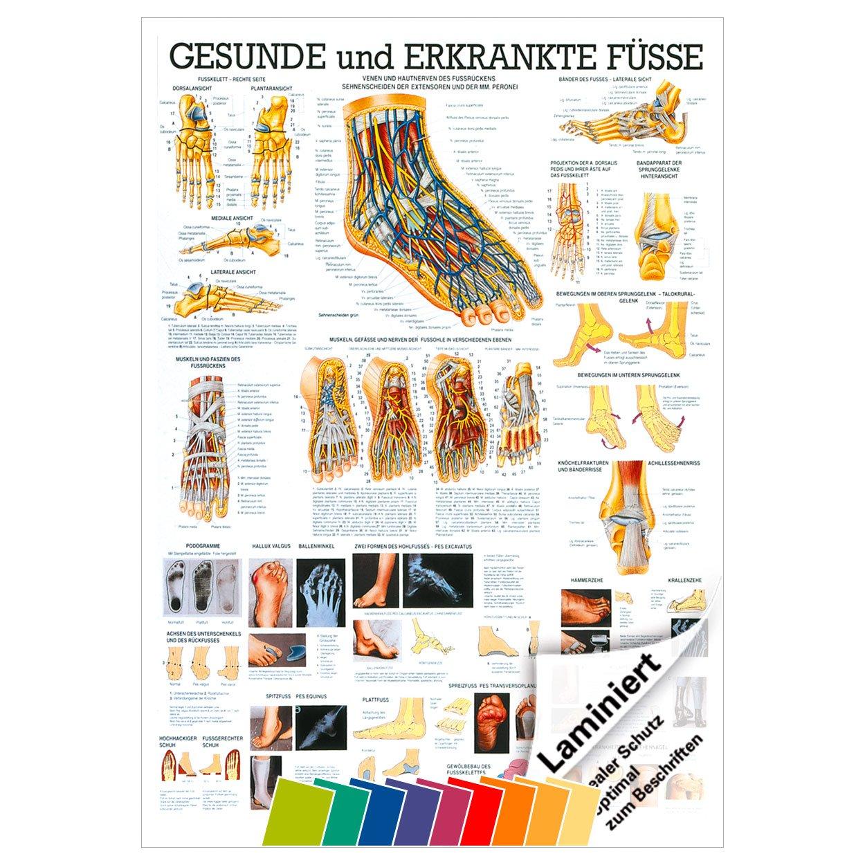 Ausgezeichnet Artikel Zum Anatomie Bilder - Physiologie Von ...