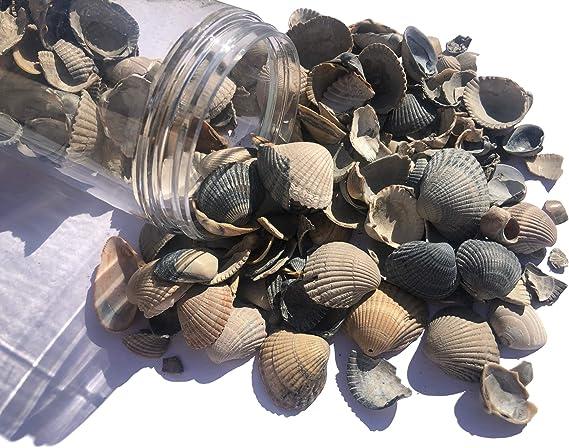 FAIRY TAIL & GLITZER FEE Conchas 500 ml Lata Decoración Granulado de Mesa Decoración de jarrones Rellenos mar Decorativo Cuencos: Amazon.es: Juguetes y juegos