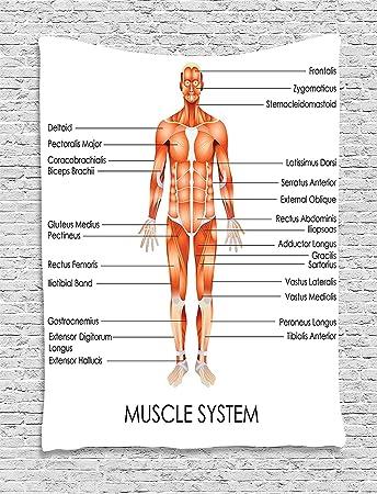 Superweicher Fleece Überwurf Decke menschlichen Anatomie Muskel ...