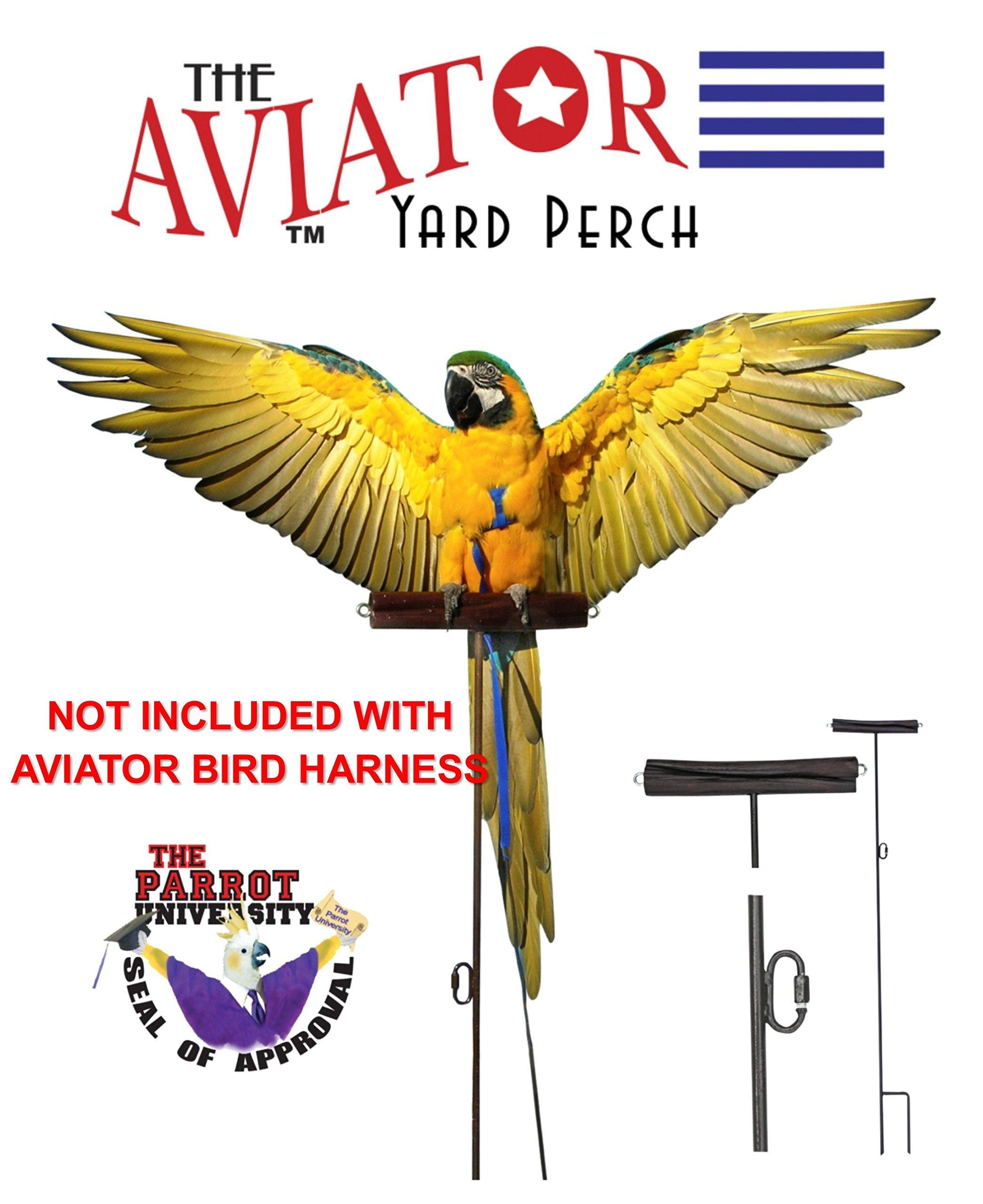 The AVIATOR Pet Bird Harness and Leash: Petite Black by The AVIATOR