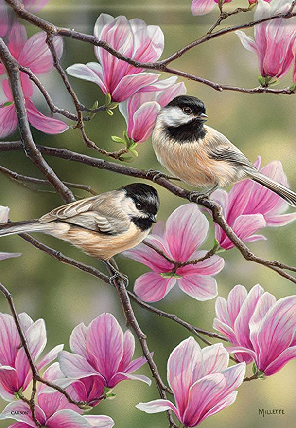 Image result for chickadee spring