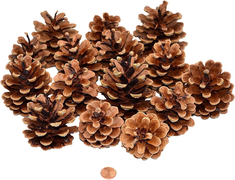 4-5cm im Beutel ca.50 Stück  Basteln Weihnachten kleine Deko Tannenzapfen ca