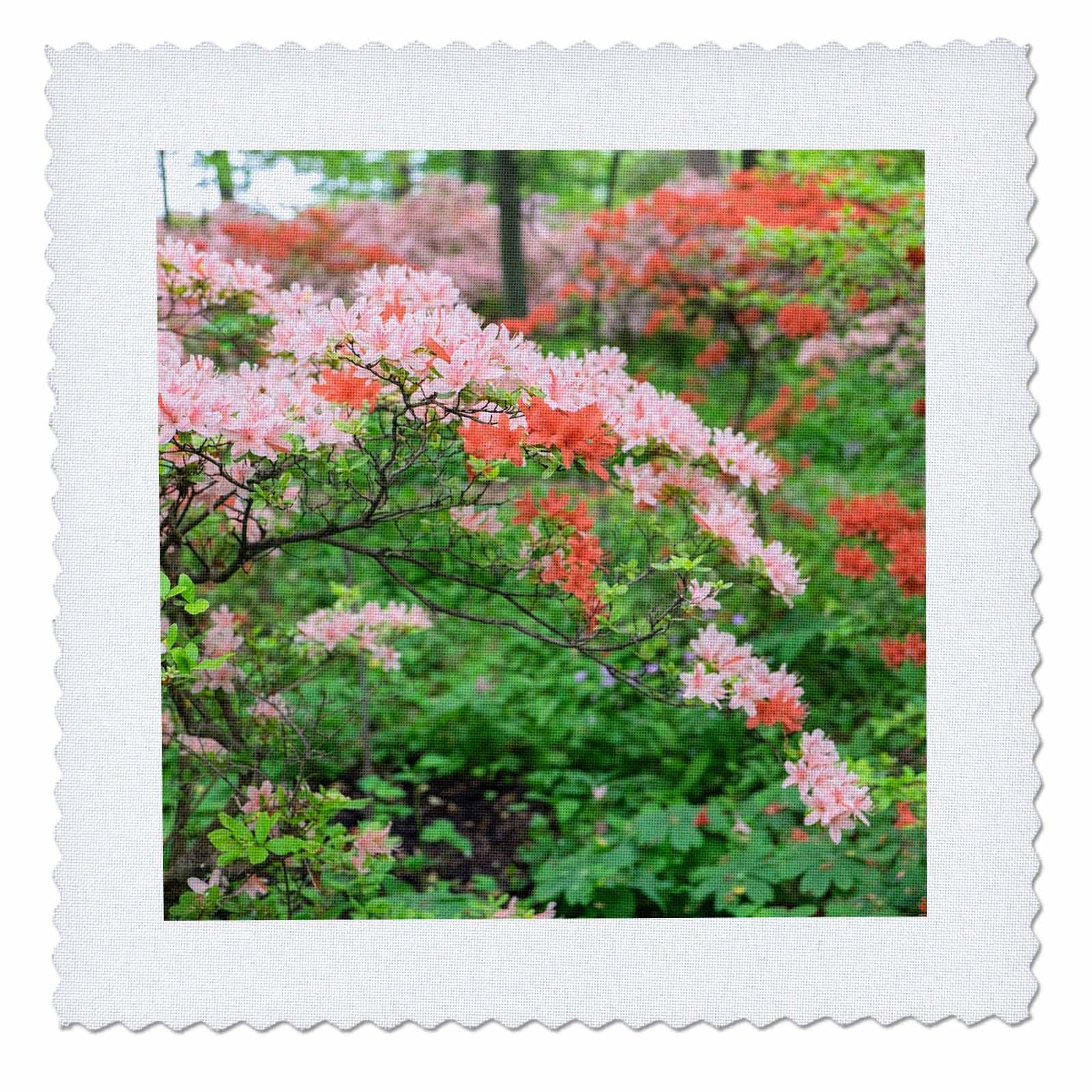 3dRose Danita Delimont - Forests - Pink Azaleas in Azalea Woods, Winterthur, Delaware, USA - 16x16 inch quilt square (qs_278837_6)