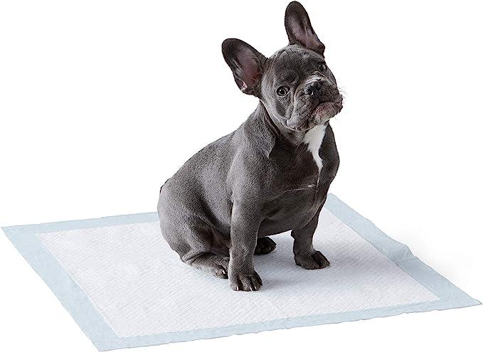 AmazonBasics - Toallitas de entrenamiento para mascotas (tamaño regular, 50 unidades)