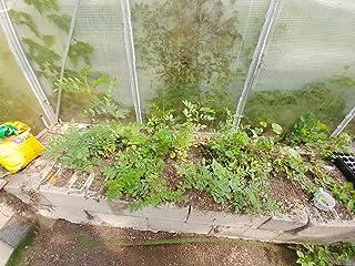 PLAT FIRM Germinazione dei semi: pianta di liquirizia