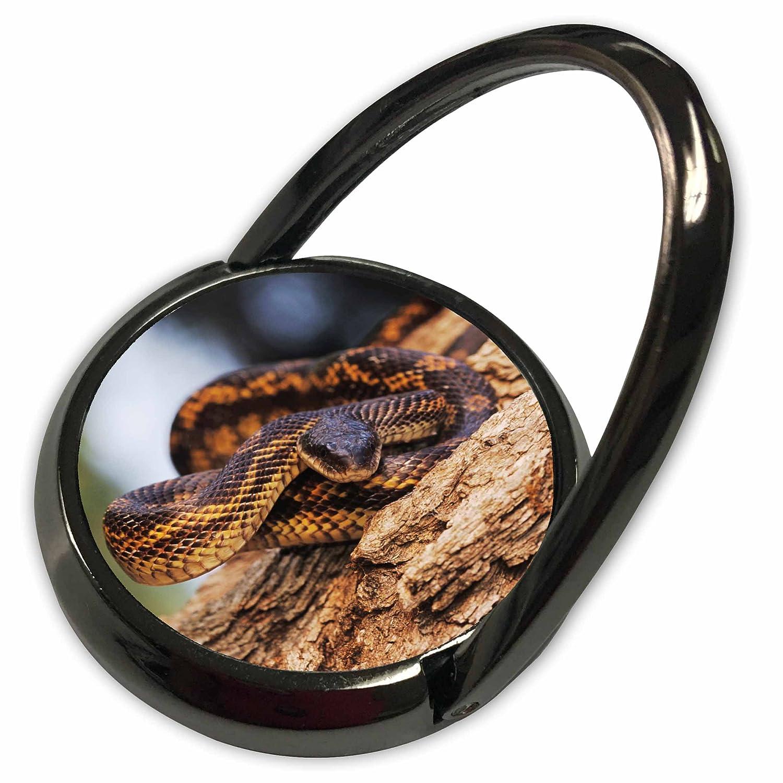 Amazon com: 3dRose Danita Delimont - Snakes - Texas Rat