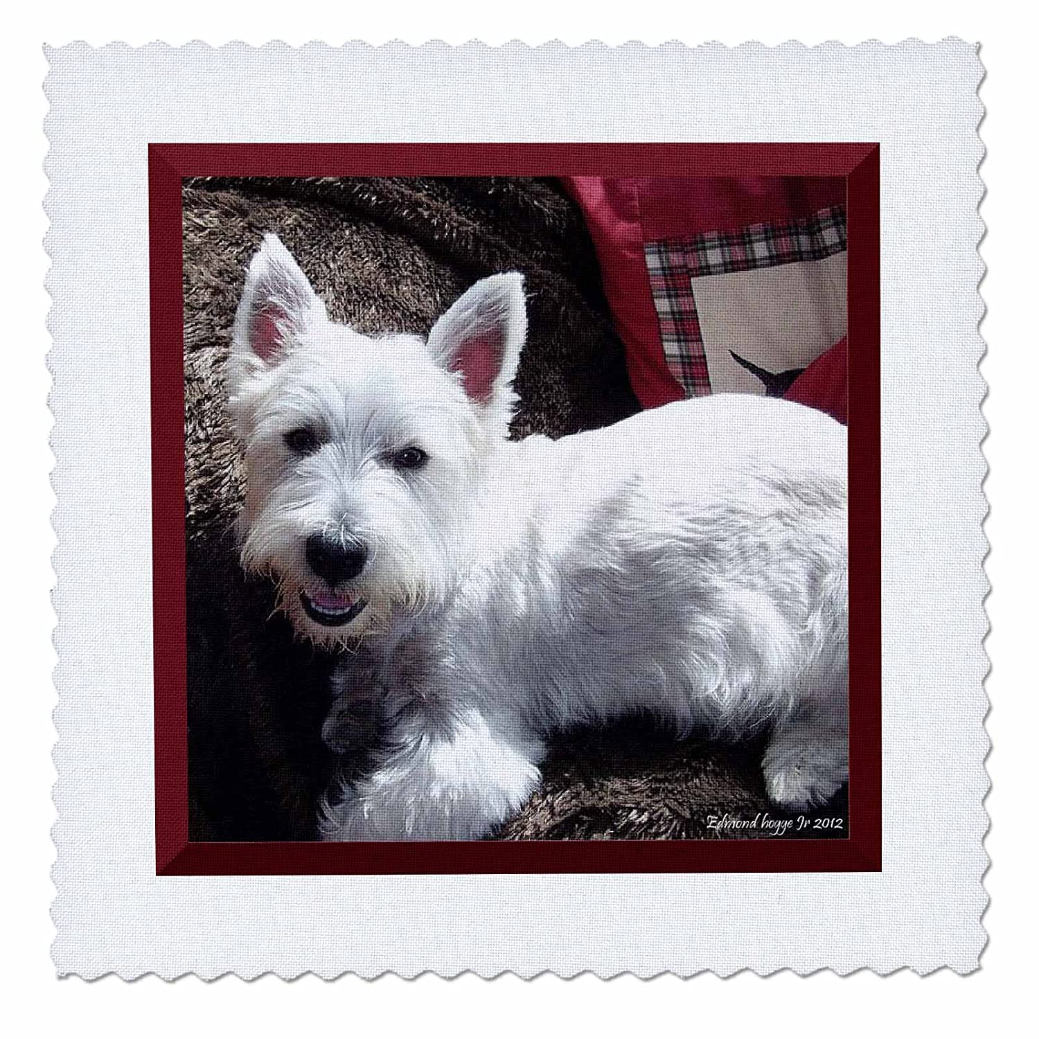 10 by 10-Inch 3dRose qs/_39514/_1 West Highland White Terrier Quilt Square