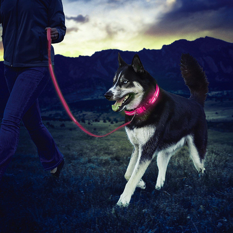 ZeWoo Collier lumineux, Collier de sécurité pour chien LED rechargeable USB + Laisse pour chien LED - Grande visibilité et sécurité améliorée - (Moyen) (Vert)