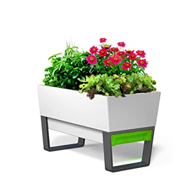 Glowpear Self-Watering Urban Garden Planter : Garden & Outdoor