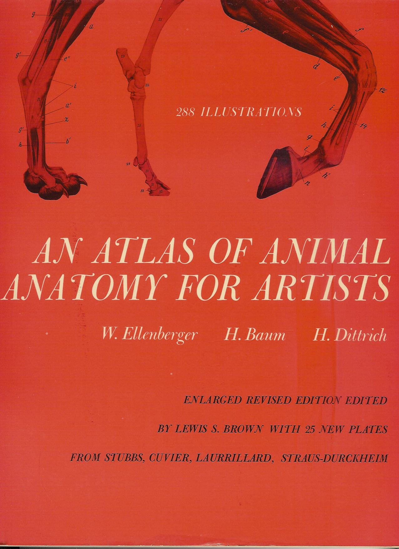 An Atlas Of Animal Anatomy For Artists Enlarged Revised Edition W