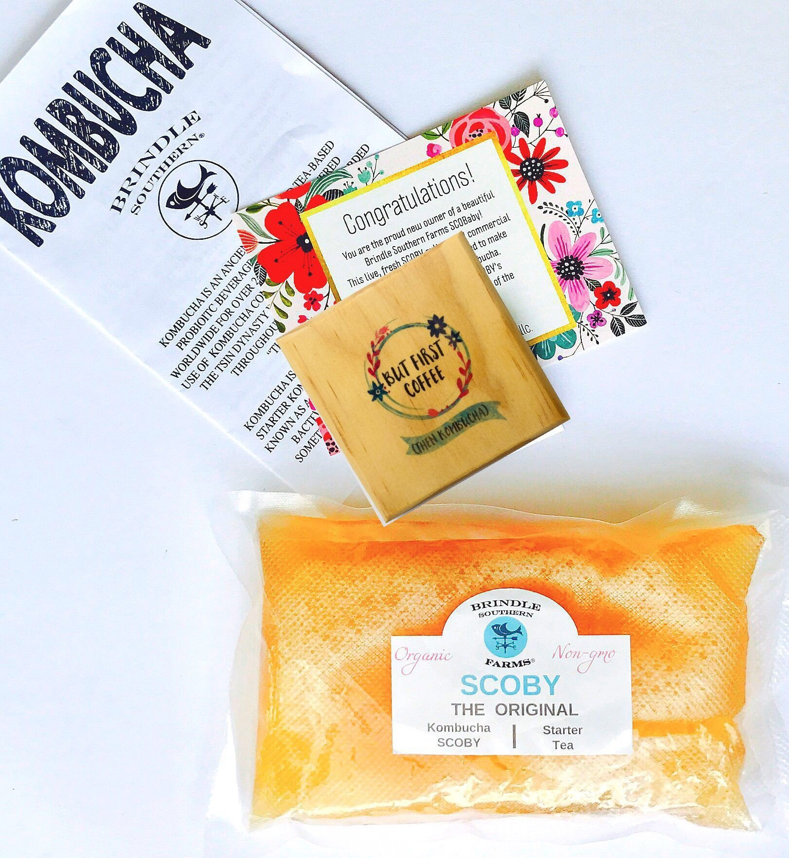 Kombucha Lover's Gift Set: Kombucha SCOBY culture & Wood Coaster But First Coffee, Then Kombucha (Brindle Southern Farms