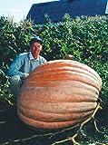Dill's Atlantic Giant Pumpkin Seeds Monster Pumpkin!!! Can Grow to 1600 lbs.