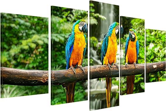 Bilderdepot24 Cuadros en Lienzo Azul Loro Guacamayo Amarillo - 100x50 cm 5 Piezas - Enmarcado Listo Bastidor Imagen. Directamente Desde el Fabricante: Amazon.es: Hogar