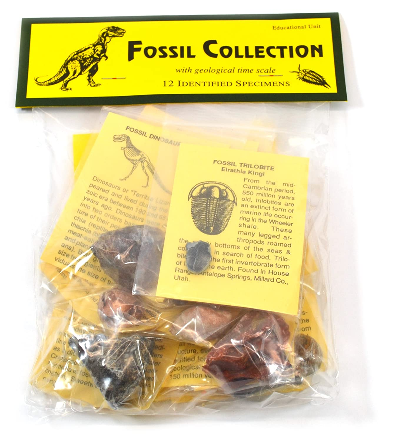 Information Cards and Geological Timescale Deluxe Authentic Fossil Collection with 12 Identified Specimens