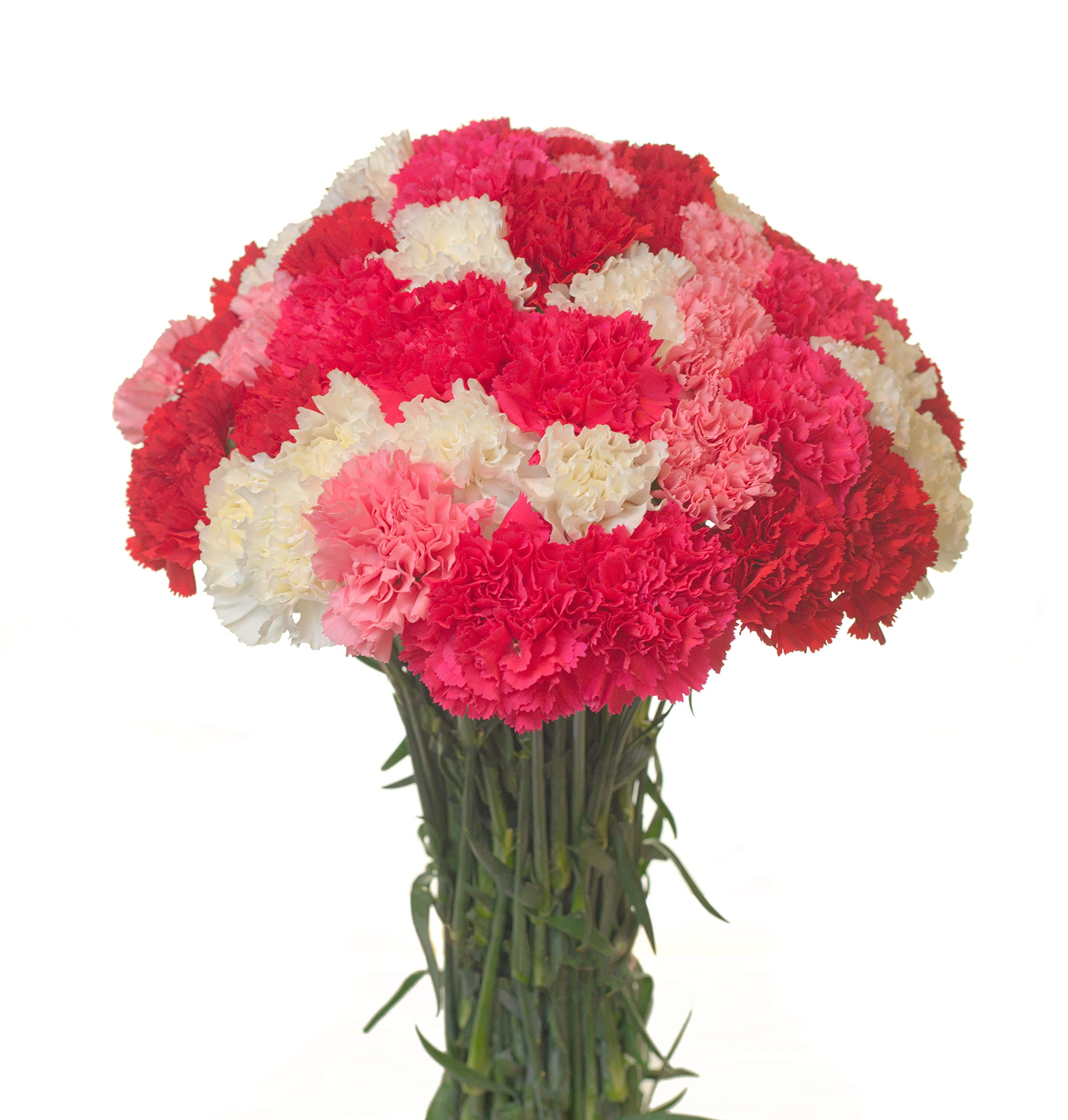 Carnations Multiple Colors and Quantities (50, Assorted)