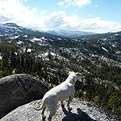 Amazon Com Nutramax Denamarin Tabs For Large Dogs 35 Lbs