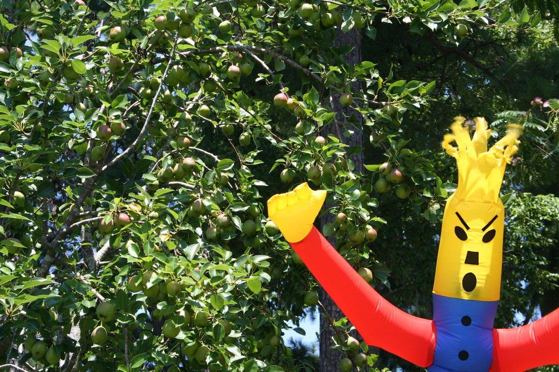 AIRCROW Blackbird Inflatable Scarecrow