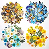 160 PCS Real Dried Pressed Flowers Leaf Plant Herbarium and Butterfly Transparent Stickers for Resin Mold Jewelry Making (Yel