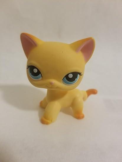 Amazoncom Shorthair Cat 339 Orange Blue Eyes Rust Tail
