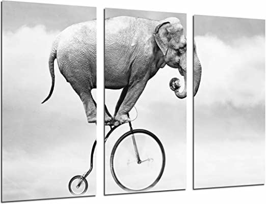 Poster Fotográfico Hipster, Animal Elefante en Bicicleta, Blanco y ...