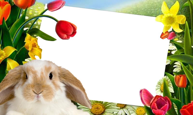 amazoncom easter bunny pictures frame appstore for android