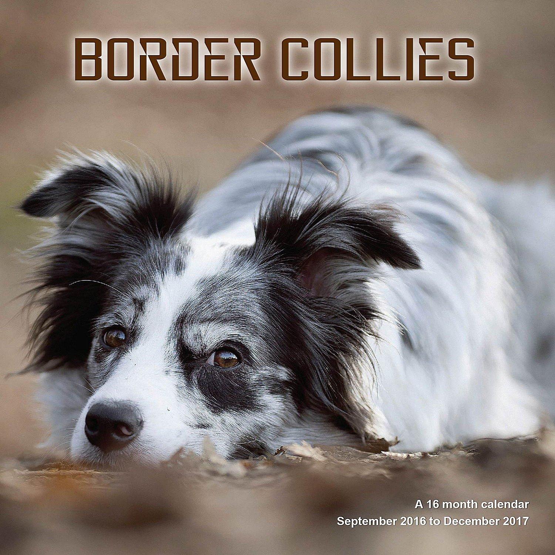 Border Collie Calendar 2017 Wall Calendars Calendar 2016 Dog