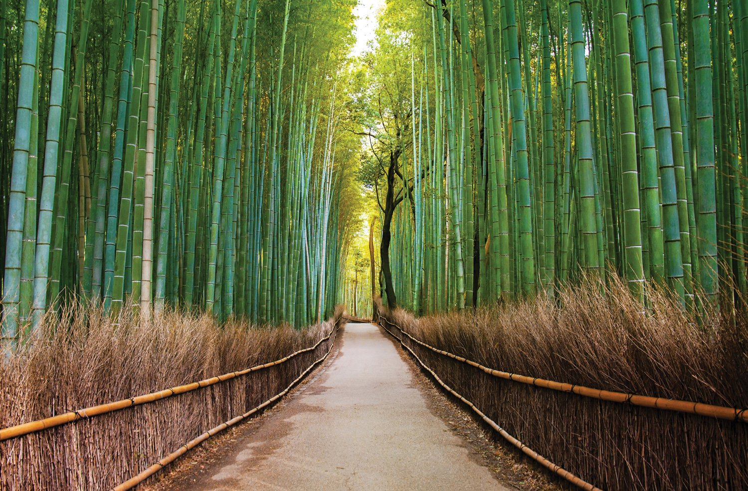 JP London Mural Bamboo Forest Path Zen Trees at 3 Wide by 2 Feet high SPMUR2405 Fully Removable Peel and Stick Wall Art