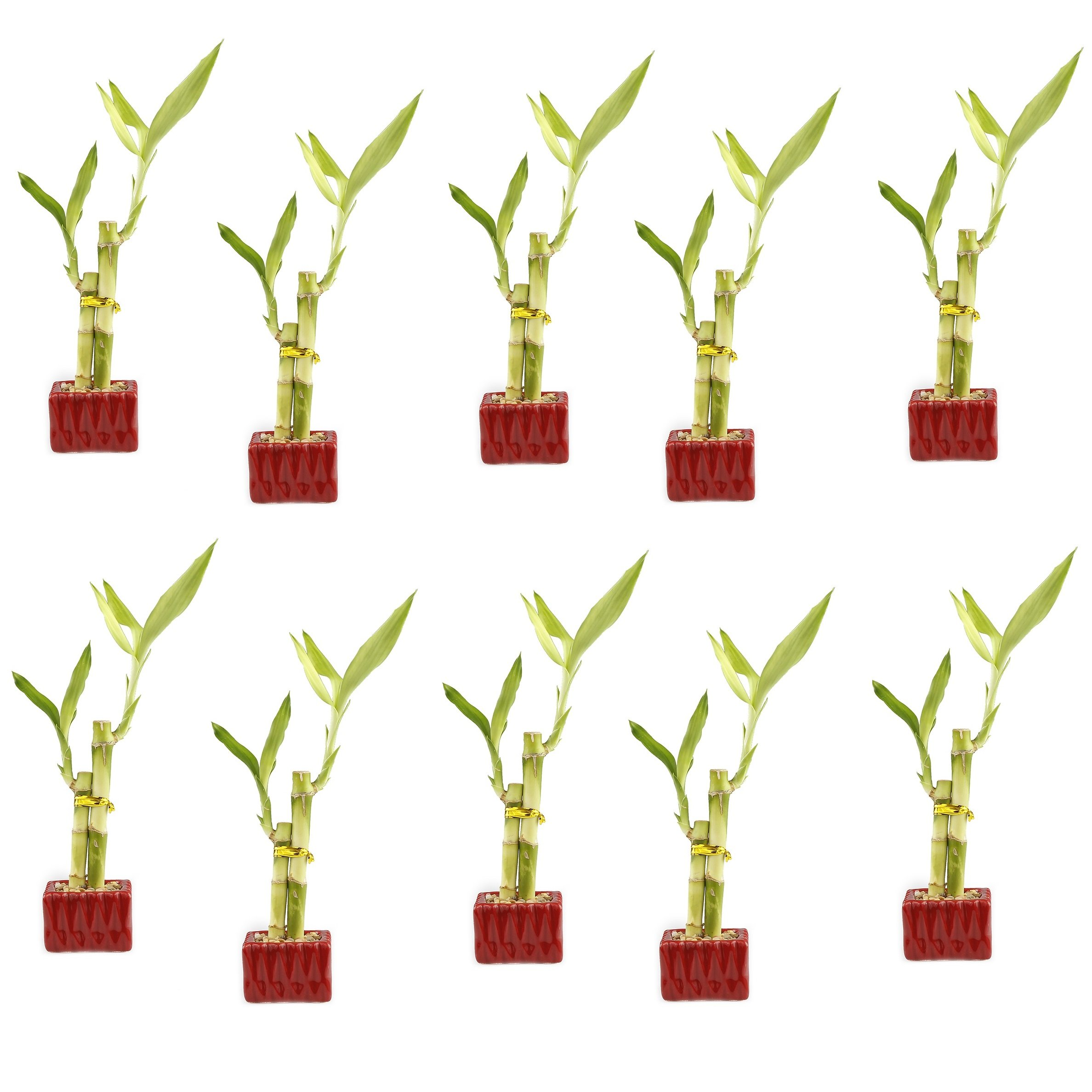NW Wholesaler - Lucky Bamboo''Love'' Two Stalk Arrangement with Square Accented Pot (Set of 10, Red)