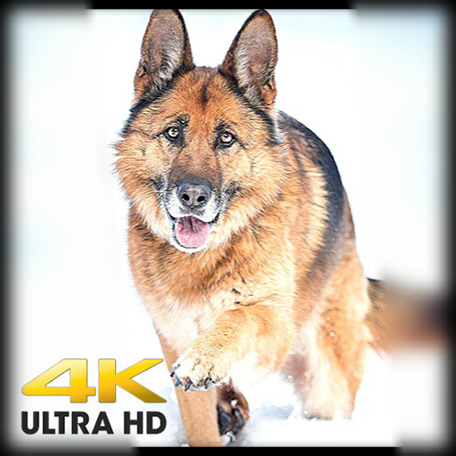 Amazon Com Dogs Hd 4k Wallpapers Backgrounds Appstore For Android