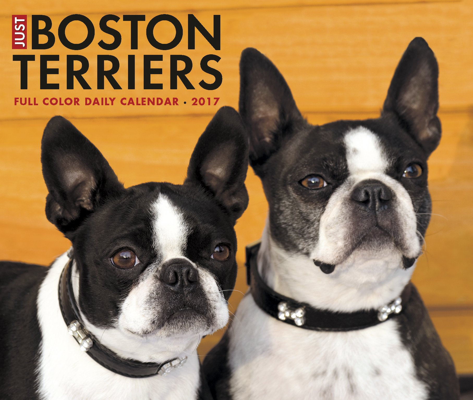 amazon com just boston terriers 2017 box calendar dog breed