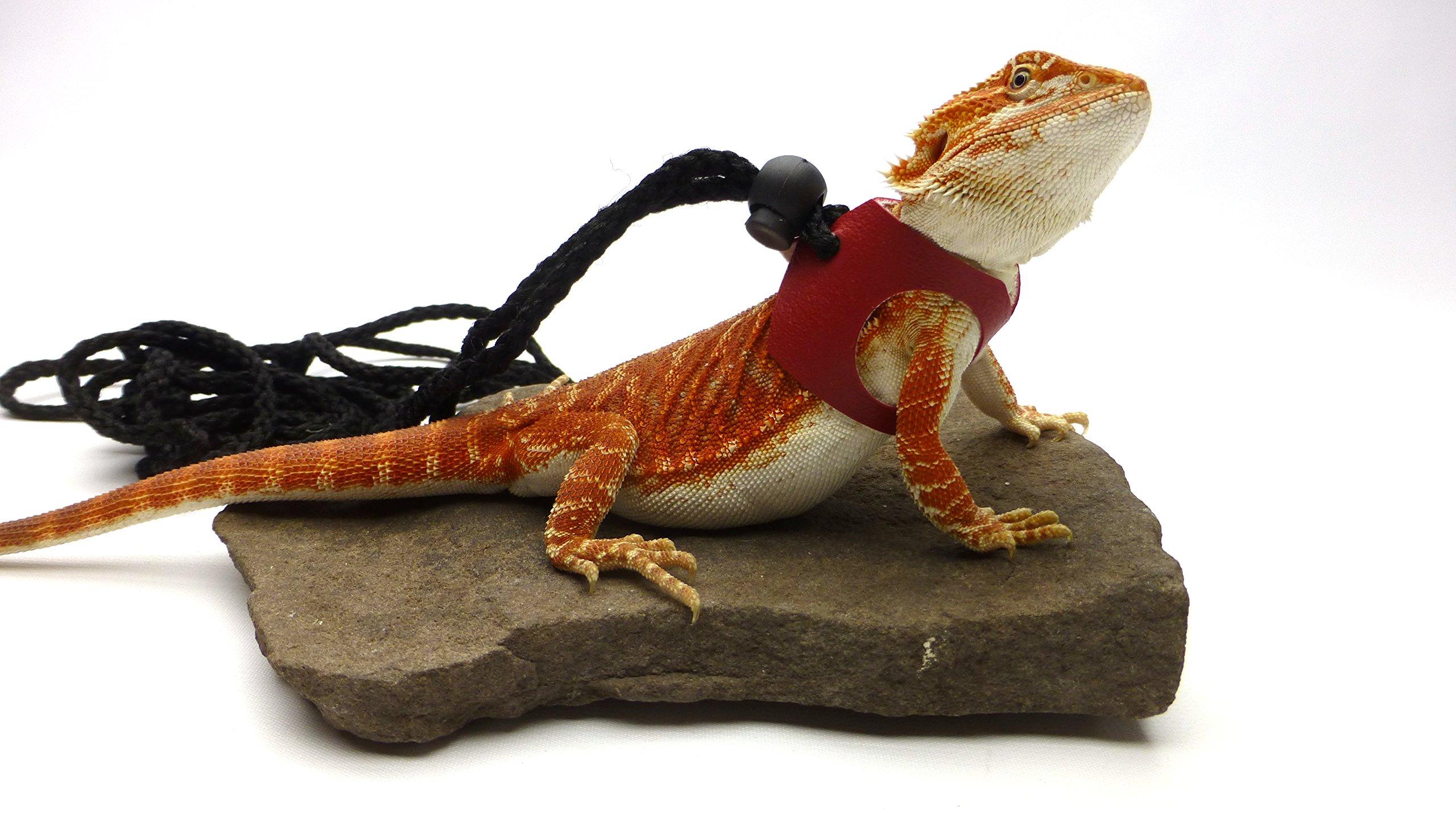 Ogle Lizard Leash, Limited Edition Red (medium size)
