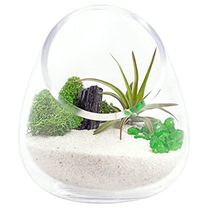Luludi Living Art Zen Crystal Gem Cut Glass Terrarium With Airplants (Black  Obsidian)