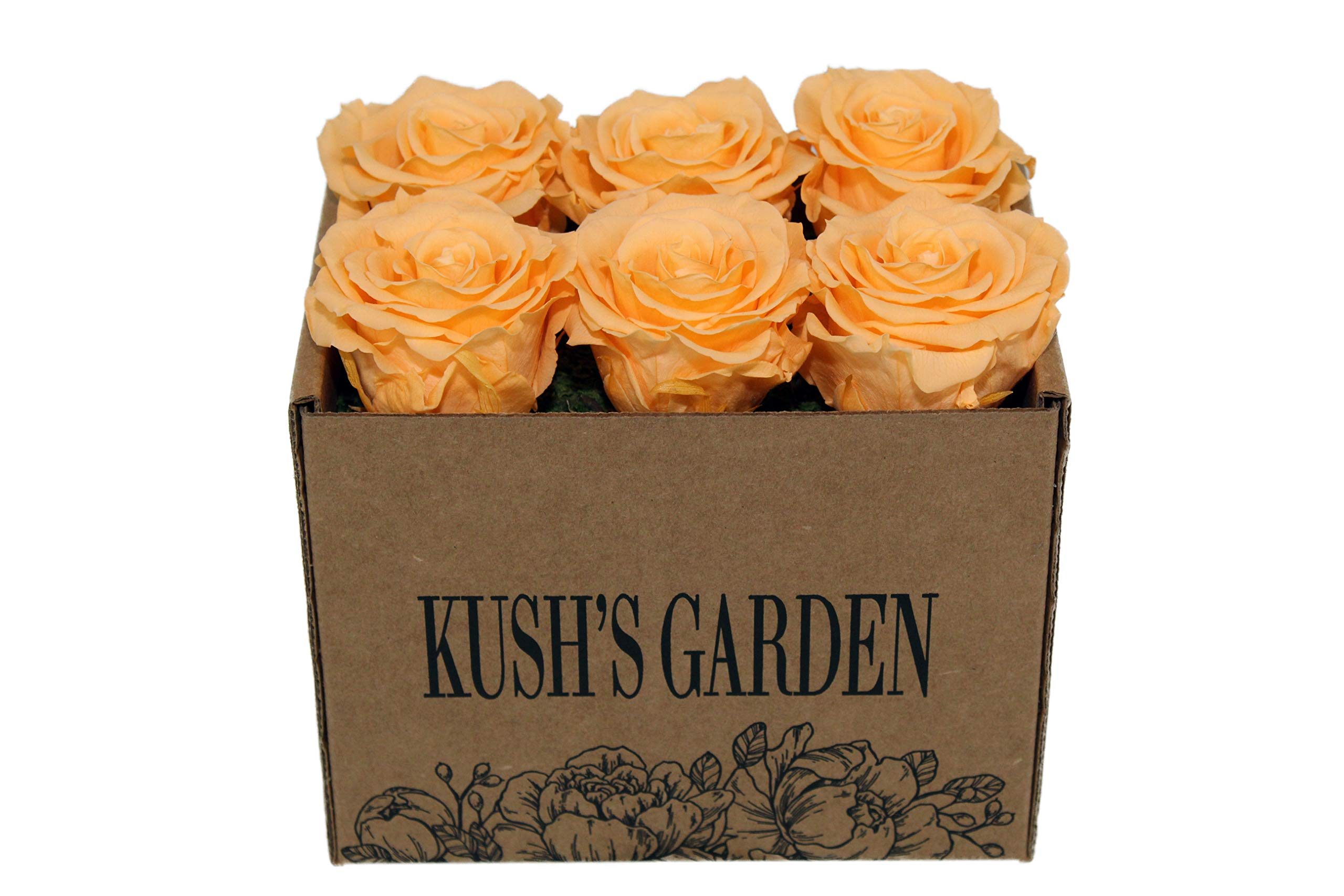 KUSHS GARDEN Real Preserved Roses in Box (Orange You Glad It's Pastel) by KUSHS GARDEN