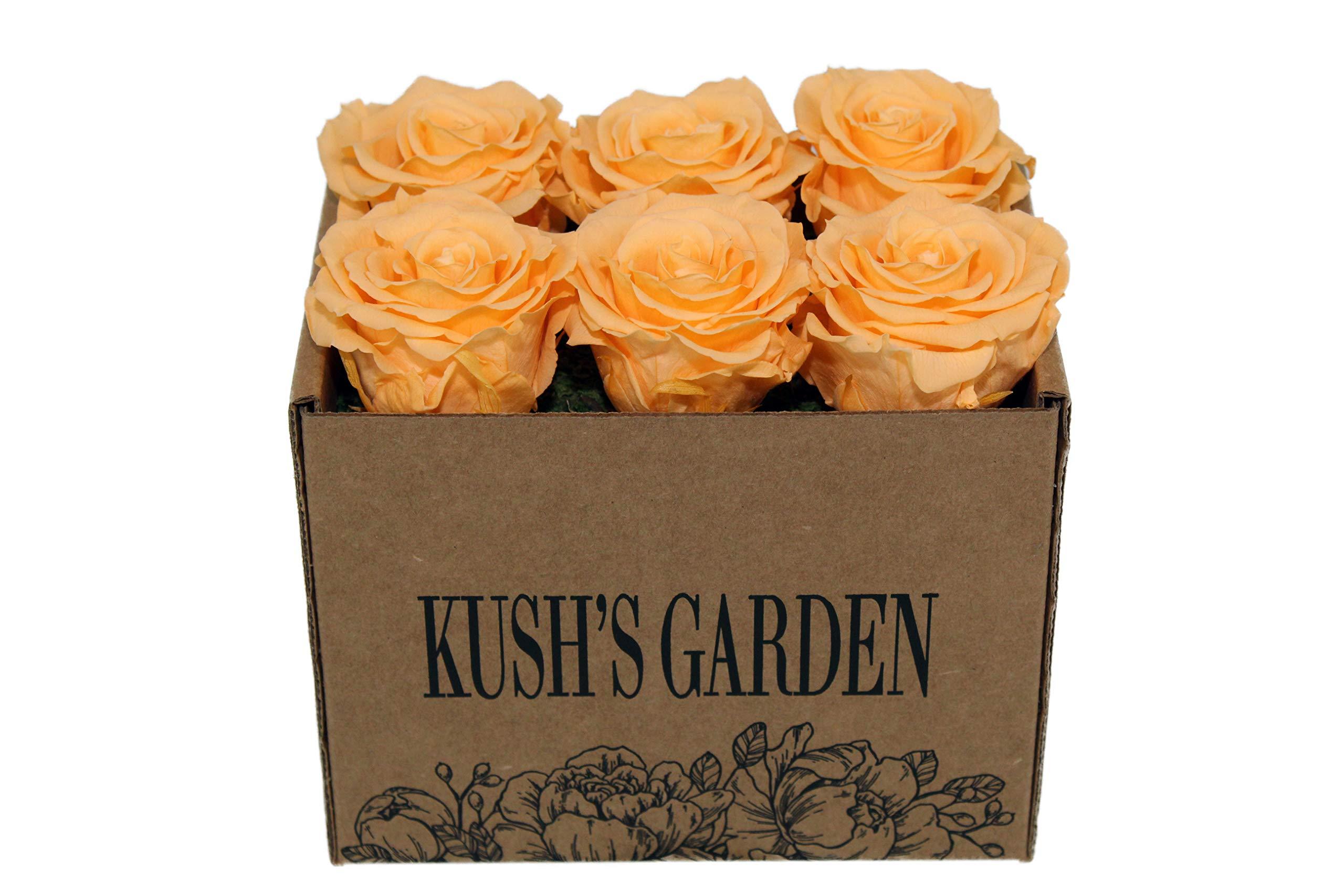KUSHS GARDEN Real Preserved Roses in Box (Orange You Glad It's Pastel)