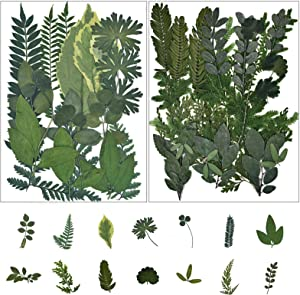Oyifan 42 PCS Assorted Real Dried Pressed Leaves Natural Dry Leaves for Pressed Leaf Art Craft DIY,14 Styles