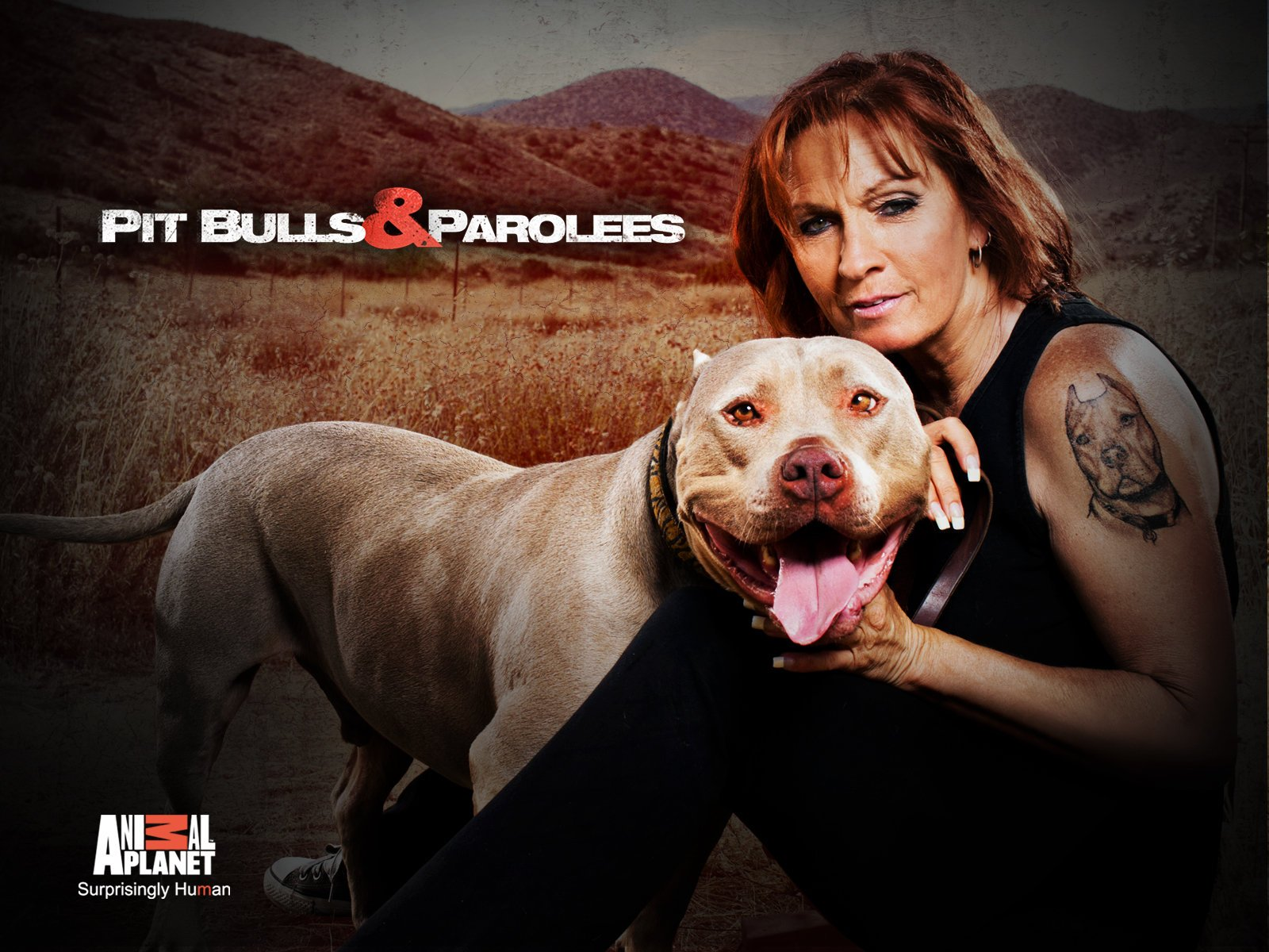 Watch Pit Bulls And Parolees Season 13 Prime Video
