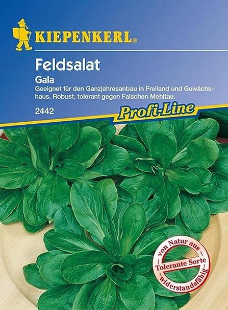 Amazon.de pflanzenservice 910196 - Gala lechuga kiepe tipo de cordero