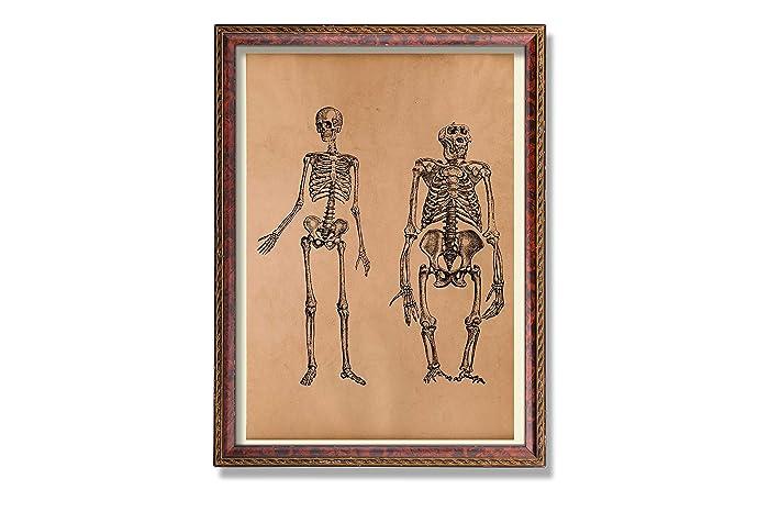 Amazon Anatomy Art Gorilla And Human Skeleton Print Medical