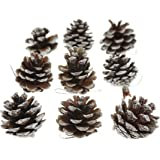 Bilipala Natural White Snow Tipped Pine Cone Decor Ornaments for Crafts, Pack of 9