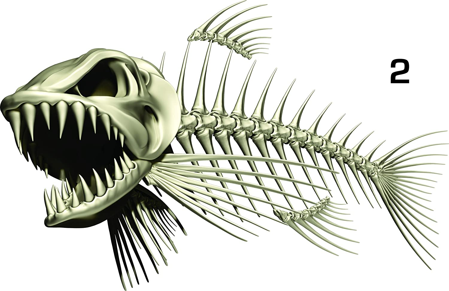 List Of Synonyms And Antonyms Of The Word Bonefish Decals