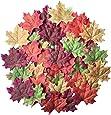 100 acero mista foglie d'autunno